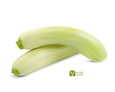 fleshy: vector young zucchini isolated on white background Illustration