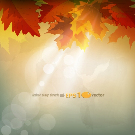 autumn leaf frame:  abstract  autumn background