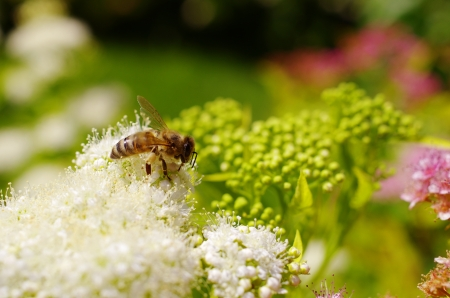 bee on a flower Stock Photo - 17170595