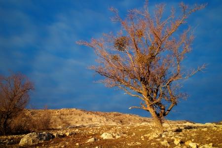 tree on the rocks Stock Photo - 17170604