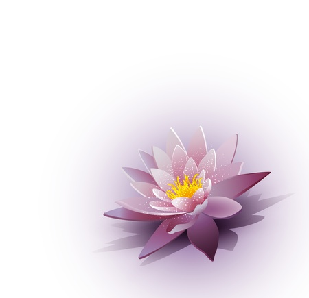 vector background with a water lily on the white background