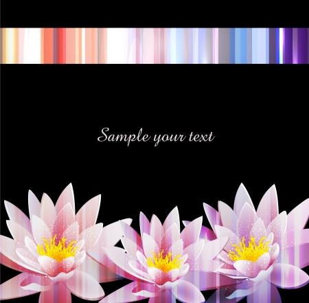 water lilly: vector holiday background with a water lily