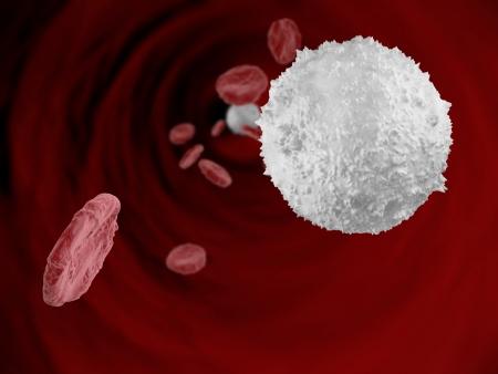 globuli bianchi: Interno di un vaso sanguigno con globuli rossi e globuli bianchi Archivio Fotografico