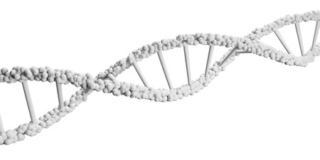 dna background: A close-up of a strand of human DNA, white background