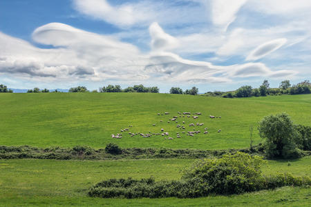 A hill with sheep grazing and a sky full of clouds