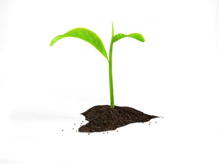 小さな植物に由来する一握りの土くれ 写真素材 - 70302445