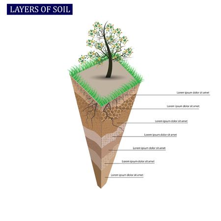 Perfil del suelo y horizontes del suelo. Terreno con pasto verde y raíces de plantas. Ilustración vectorial.