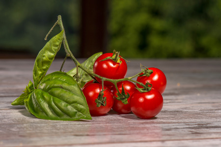 Close-up picture of branch of small red and tasty tomatoes with big green leave Stock Photo