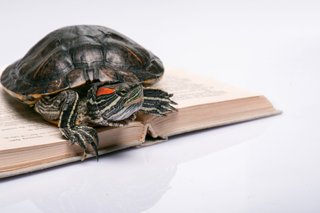 ancient turtles: red ear turtle on opened book  isolated on white background