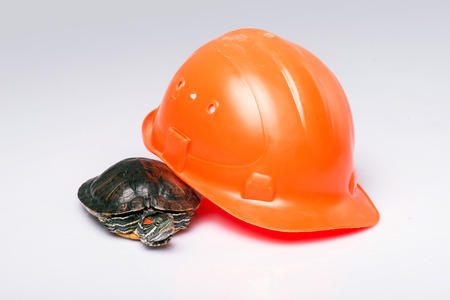 ancient turtles: red ear turtle with orange hard hat  isolated on white background