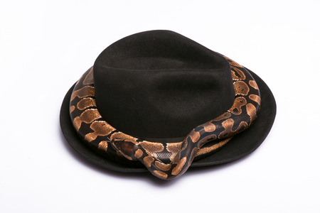 black boa: Boa constrictor around black  hat  isolated on white background  with copy place Stock Photo