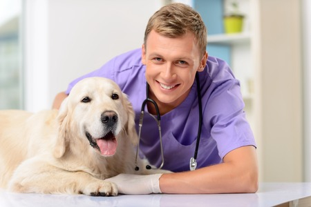 upbeat: Enjoy working with pets. Overjoyed upbeat handsome professional  vet smiling and holding dog while evincing joy
