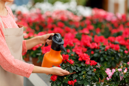 spray can: Love my job. Close up of spray can in hands of professional florist holding it while watering flowers