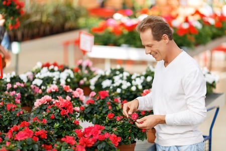 upbeat: What to choose. Positive upbeat smiling customer looking at flowers and buying them while evincing joy Stock Photo