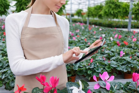 diligente: Diligent worker. Close up of tablet in hands of pleasant positive female florist holding it and doing her job