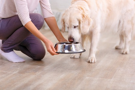 Close up of bowl with food in hands of pleasant caring woman holding it while feeding her dog Stock Photo
