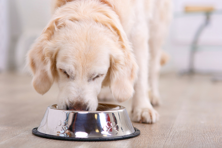Nice taste.  Close up of beautiful dog eating from the bowl Foto de archivo