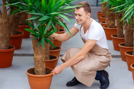 florae: Busy at work. Attractive florist is smiling while adjusting big flowerpots.