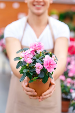 florae: Blooming flower. Handsome male florist smiling widely while presenting beautiful blooming flower.