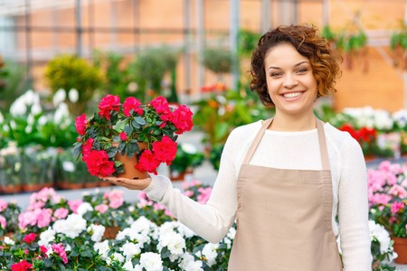 appealing: Blooming flower. Appealing female florist smiling pleasantly while presenting beautiful blooming flower.