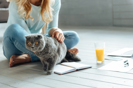 living apartment: Close up of young woman petting a cat Stock Photo