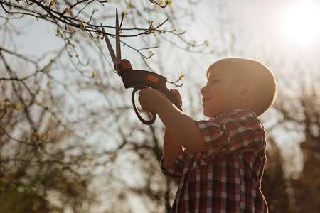 Little boy cutting branches in sunlight Stock Photo
