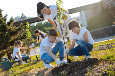 Attentive boys planting new tree in park Foto de archivo