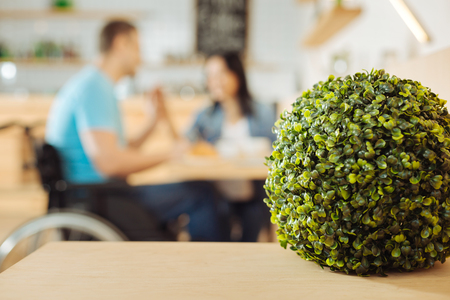 Plant. Lovely green round plant standing on the table in a cafe and a woman and a man in the wheelchair holding hands and sitting in the background Stock Photo