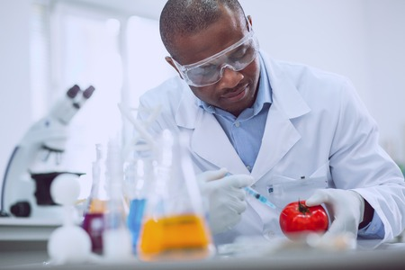 Research on tomatoes. Concentrated experienced biologist wearing a uniform and testing tomatoes
