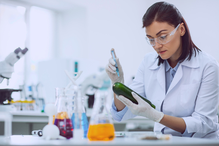 Good quality. Serious female biologist wearing a uniform and testing a marrow squash Stock Photo