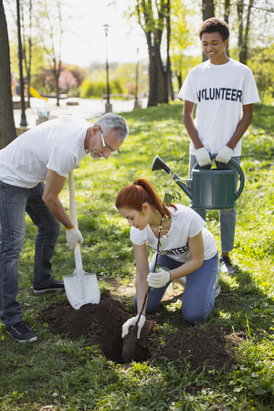 Volunteer for parks. Pleased three volunteers planting tree and gazing down