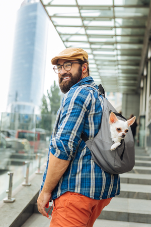 Going to work. Bearded businessman wearing glasses and hat going to work with little white dog in backpack