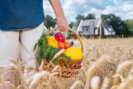 Basket with vegetables. Man wearing beige shorts and blue shirt holding basket with vegetables after gathering nice harvest