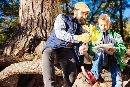 School project. Pleasant nice father and son studying trees while being in the forest Foto de archivo