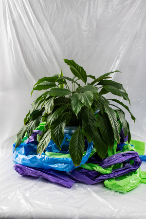 Example and reminder. Lush and green house plant standing in a pot in the middle of plastic representing our ecology