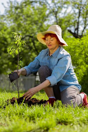 Near little tree. Red-haired aged woman feeling amazing while digging ground near little tree