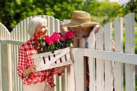 Smelling pink flowers. Bearded man wearing straw hat smelling pink flowers while talking with neighbor