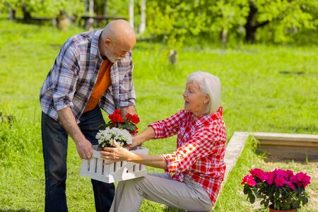 Wife talking. Grey-haired aged husband and wife talking while putting flowers pots into white box