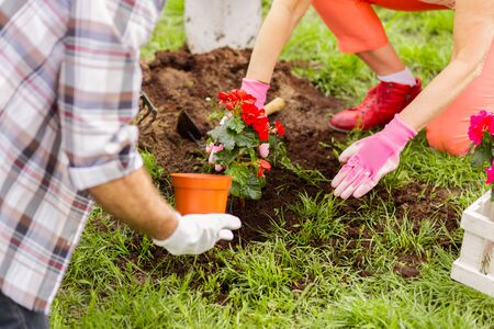 Flowers and soil. Husband and wife planting flowers after enriching soil while enjoying summer time