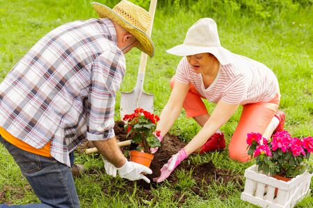 Couple planting flowers. Top view of retired couple loving nature planting flowers near cottage house