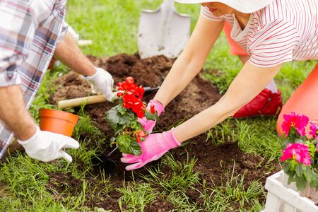 Planting red flowers. Top view of couple wearing gloves planting red flowers on nice summer day Stock Photo