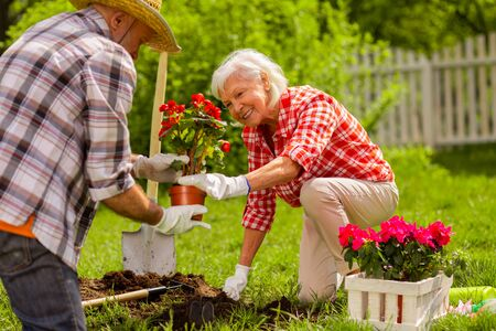 Wearing white gloves. Retired husband and wife wearing white gloves planting flowers near house together