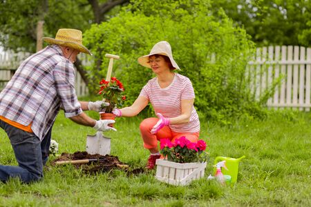 Loving husband. Helpful retired loving husband helping his appealing aged wife with planting flowers Stock Photo