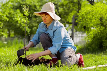 Zomerhoed dragen. Aantrekkelijke bejaarde vrouw met een zomerhoed die grond graaft in de buurt van een net geplante boom Stockfoto