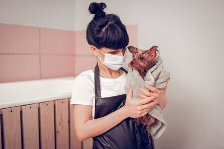 Wrapped in towel. Dark-haired woman wearing mask holding cute little dog wrapped in towel