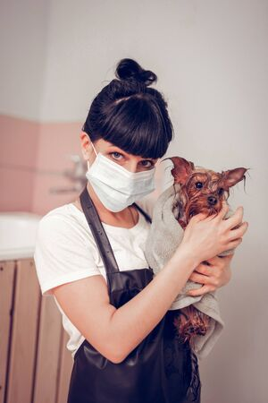 Holding cute dog. Dark-eyed young woman holding cute dog in towel after grooming and washing Standard-Bild