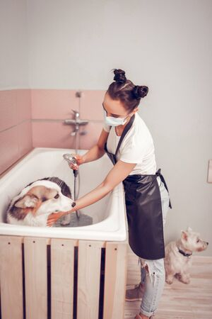 Worker washing dog. Dark-haired worker of grooming salon wearing mask while washing dog in bathtub Stock Photo - 126431009
