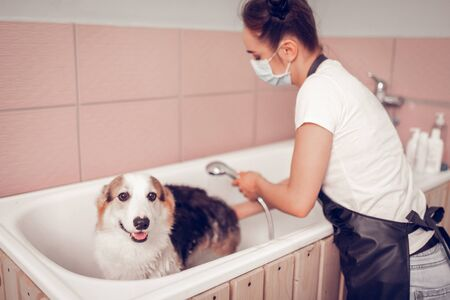 Dog opening mouth. Cute dog opening mouth while worker of grooming salon washing him in the bathtub Stock Photo