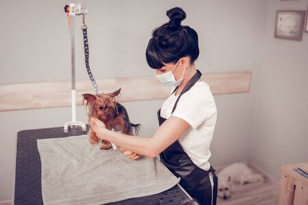 Care of dog. Top view of worker of grooming salon taking care of dog after washing