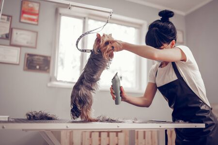 Standing near window. Dark-haired young woman standing near window while shaving little cute dog